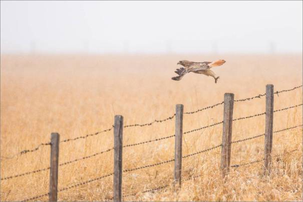 Fence launch - 2014 © Christopher Martin
