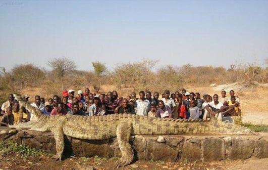 تمساح ضخم جدا